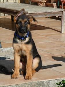 Ishtar 11 weeks